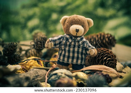 Christmas is coming: a teddy bear in the green conifers and cones