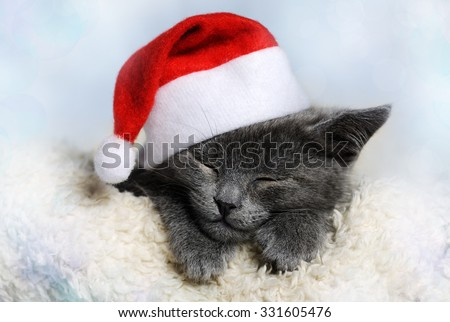 christmas kitten - stock photo
