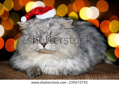 christmas kitten with cute small hat and bokeh background  - stock photo
