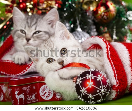christmas kittens - stock photo
