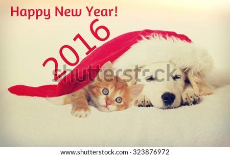 Christmas labrador puppy and kitten sleeping - stock photo