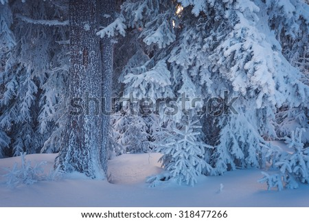 Christmas landscape in a fabulous winter forest - stock photo
