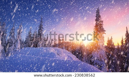 Christmas landscape with fresh snow. Winter panorama - stock photo