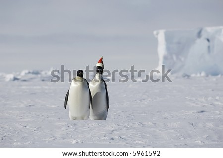 Christmas on ice with a penguin pair - stock photo