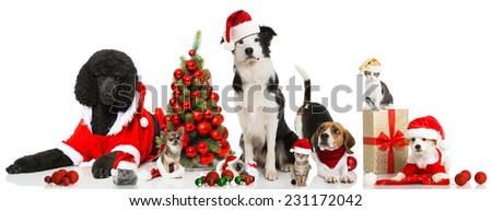 Christmas pets - stock photo