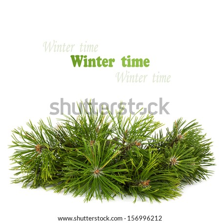 Christmas pine tree branch isolated on a white background - stock photo