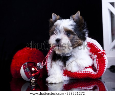 Christmas puppies - stock photo