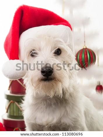 Christmas Puppy Dog - stock photo