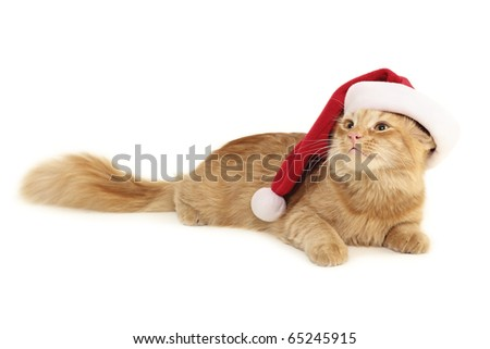 christmas red cat isolated on white background - stock photo