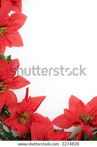 Christmas red poinsettias background over white