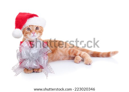 Christmas Santa cat kitten with gift present - stock photo