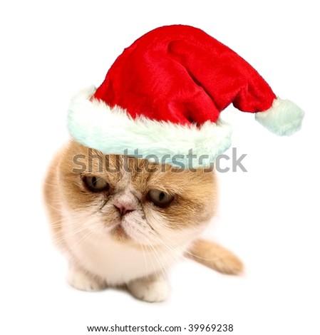 Christmas santa cat on white - stock photo
