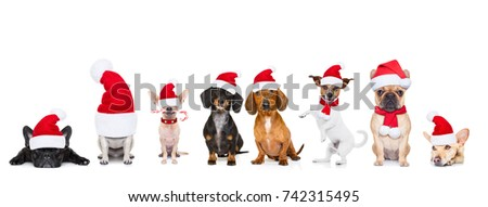 christmas  santa claus row of dogs isolated on white background,  with   funny  red holidays hat