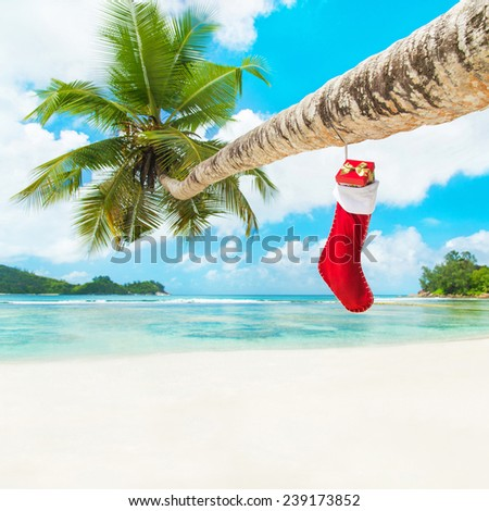 Christmas sock with gifts on palm tree at exotic tropical beach. Holiday concept for New Years Cards. Seychelles, Mahe - stock photo