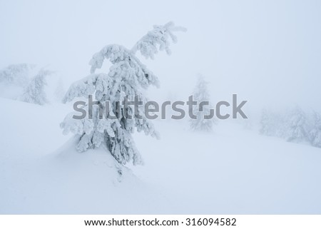 Christmas tale. Winter landscape in the spruce forest. Snow drifts - stock photo