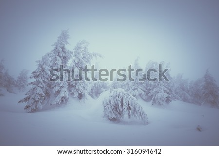 Christmas tale. Winter landscape in the spruce forest. Snow drifts. Color toning. Low contrast - stock photo