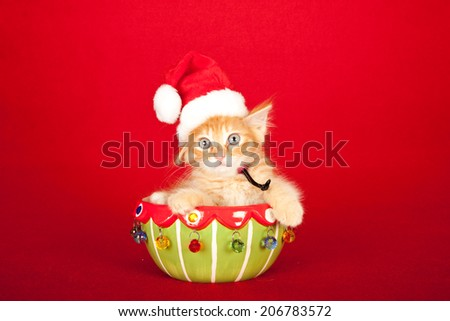 Christmas theme red kitten wearing Santa cap hat sitting inside Christmas bowl on red background