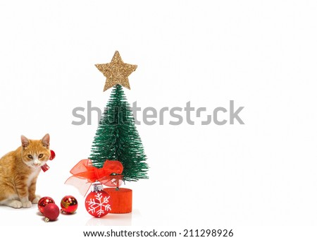 Christmas tree and ginger cat