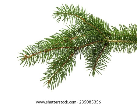 Christmas tree branch isolated on the white background - stock photo