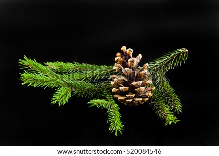 Christmas tree branch on black background