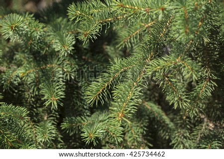 Christmas-tree branch on the white background - stock photo