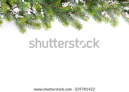 Christmas tree branch with snow. Isolated on white background with copy space - stock photo
