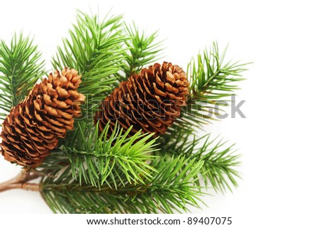 Christmas tree branches over white - stock photo