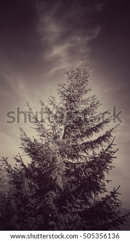 christmas tree, bw