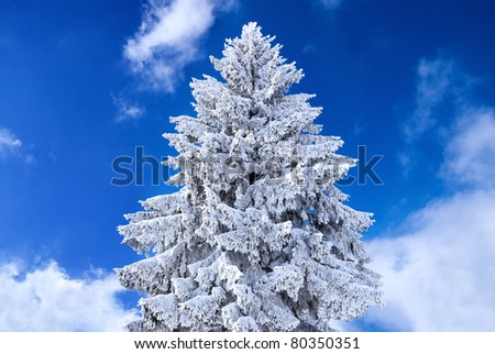 Christmas tree covered in snow - stock photo
