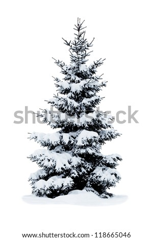 Christmas tree covered with snow isolated on white background.