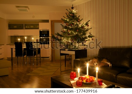 Christmas tree in beautiful modern apartment with cute puppy