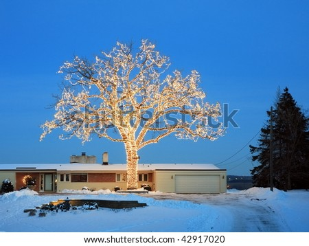 Christmas tree in Minnesota - stock photo
