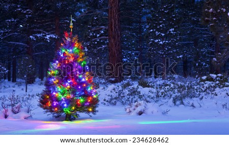 Christmas Tree in the woods at night with snow. - stock photo