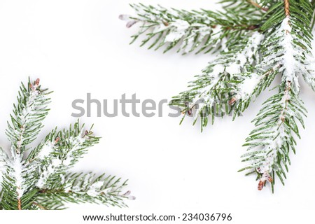 Christmas tree isolate on white background. - stock photo