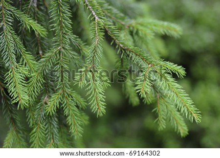Christmas tree needles - stock photo
