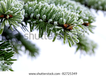 Christmas  tree on white background - stock photo