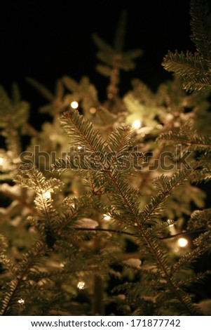 Christmas tree outside illuminated by electric candle lights - stock photo