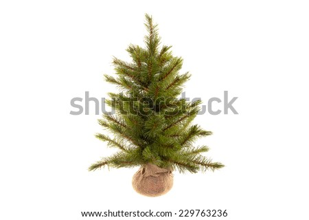 Christmas Trees Without Ornaments christmas tree without ornaments stock images, royalty-free images