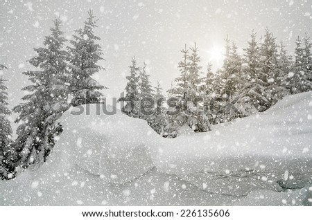 Christmas view. Snow-covered forest in the mountains. Landscape in gray tones overcast day. The sun shines through the clouds. Carpathians, Ukraine, Europe - stock photo
