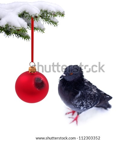 Christmas winter snowy background with spruce branch and frozen bird - stock photo
