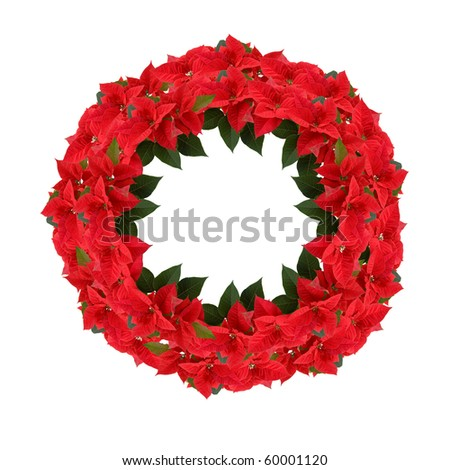 Christmas wreath from poinsettia isolated on white - stock photo