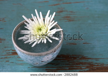Chrysanthemum flower in small cup on blue wood rustic table