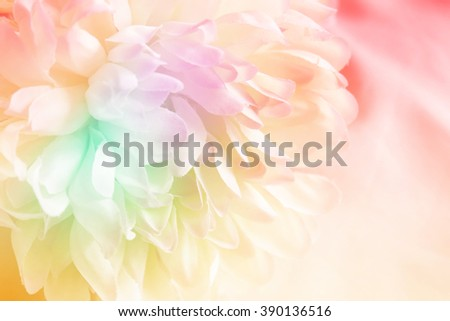 Chrysanthemum flowers made with color filter and blur style for background - stock photo