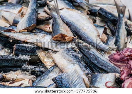 Chunks of herring and octopus await placement on hooks to catch monster halibut in Cook Inlet out of Homer, Alaska - stock photo