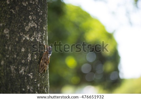 Cicada perched in tree