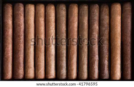 Cigars in box. - stock photo