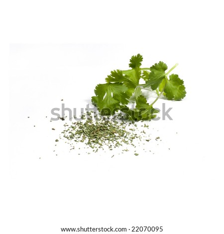 Cilantro (Coriander) - stock photo