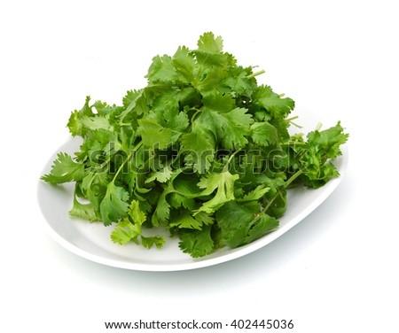 Cilantro in plate on white background  - stock photo