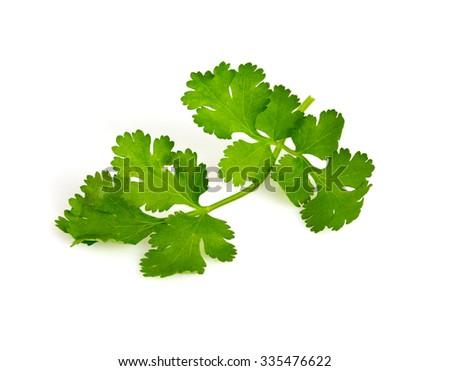 cilantro isolated on white - stock photo