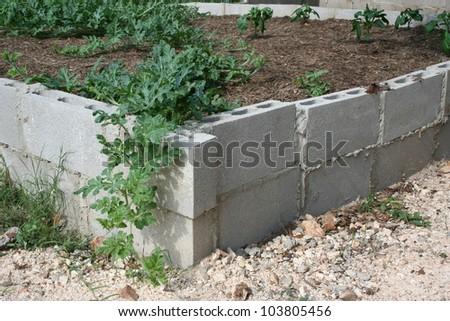 Cinder block urban garden - stock photo